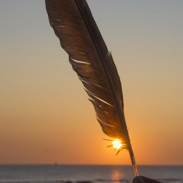 """Sunset feather"" stock image"