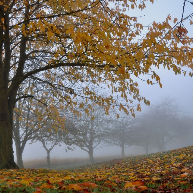 """Trees and Leaves in the Autumn Mist"" stock image"