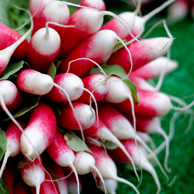 """Radishes"" stock image"