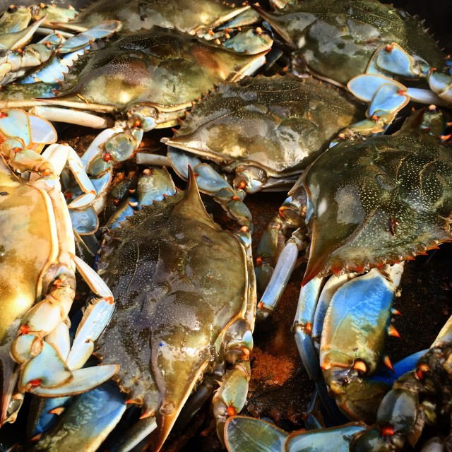 """""""Maryland Blue Crabs"""" stock image"""