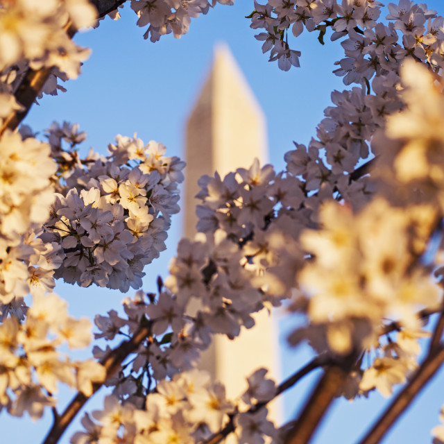 """Blossoming Monumnet"" stock image"