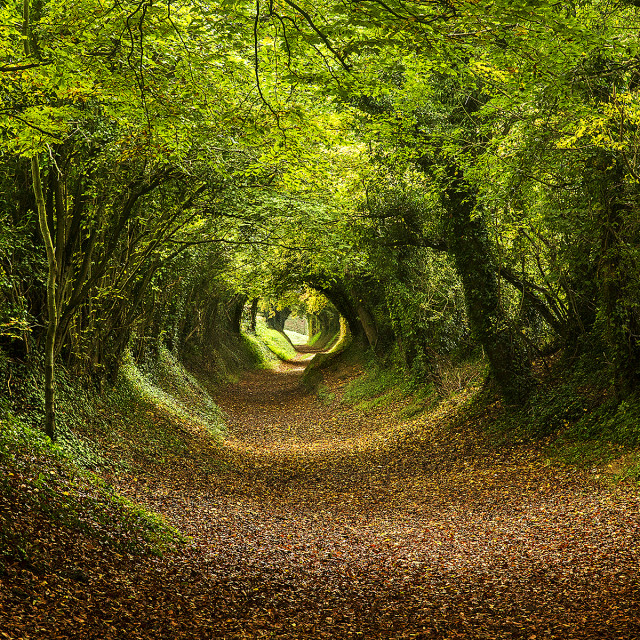 """Woodland Tunnel"" stock image"