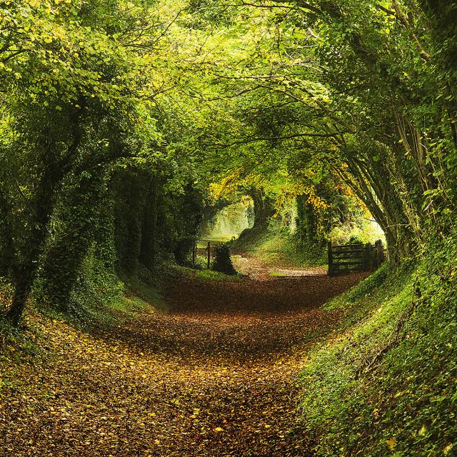 """Follow the path"" stock image"