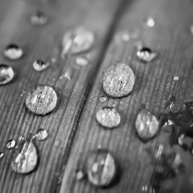 """""""Plant after Rain"""" stock image"""