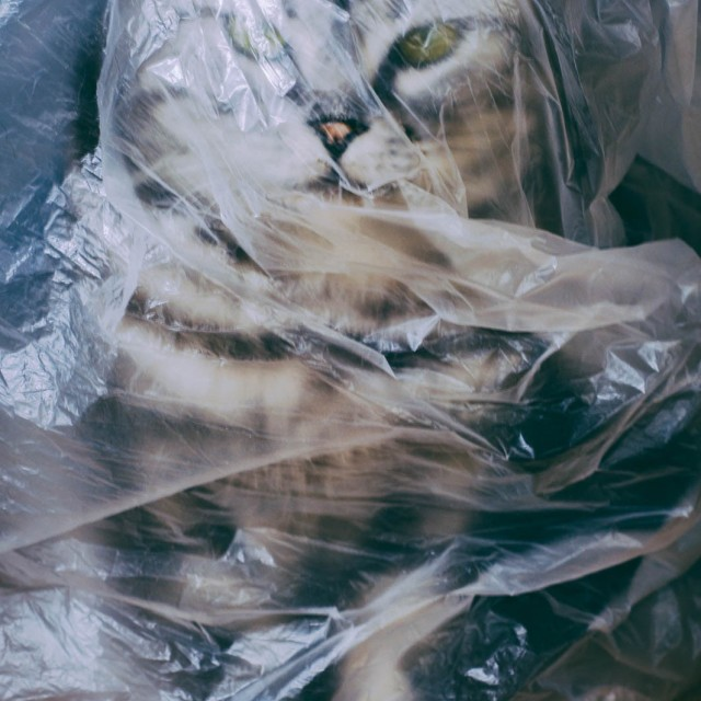 """a cat wrapped in Plastic bags"" stock image"