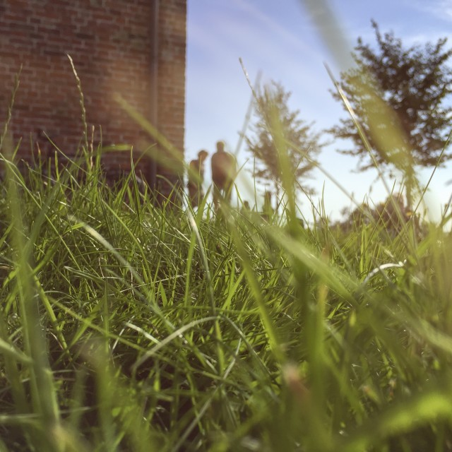 """Low angle view through grass"" stock image"