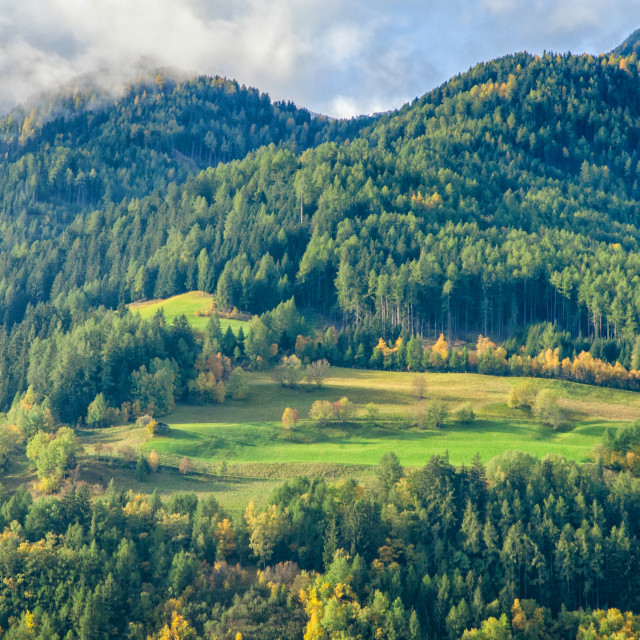 """A Mountain Forest"" stock image"