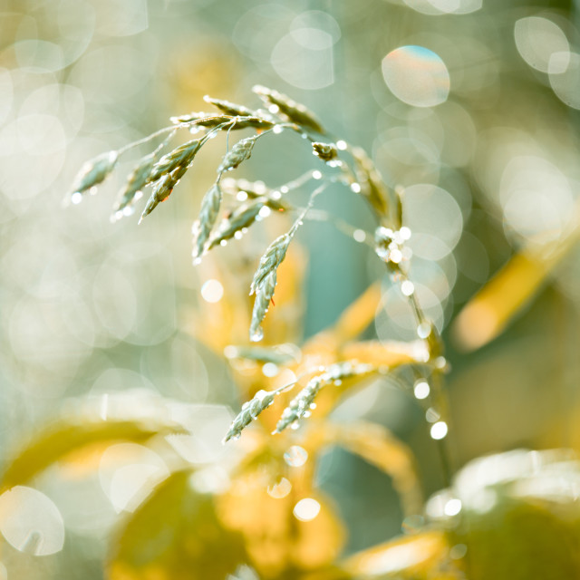 """Grass shining in the rain"" stock image"