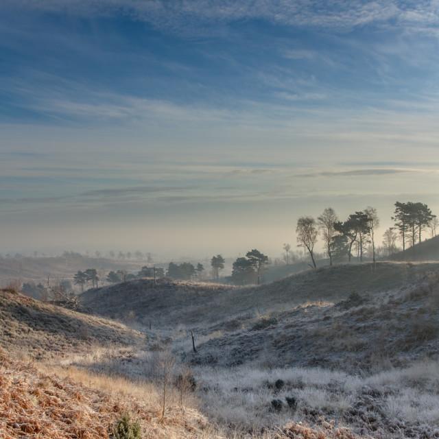 """Chobham Ridges at dawn"" stock image"