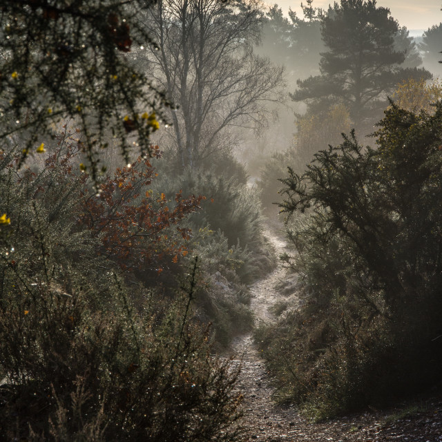 """path through the heath"" stock image"