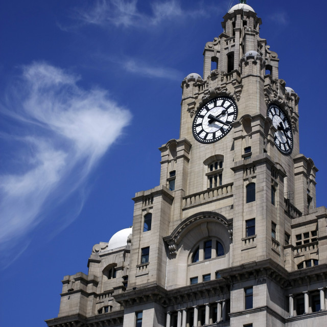 """Liver bird looks out"" stock image"