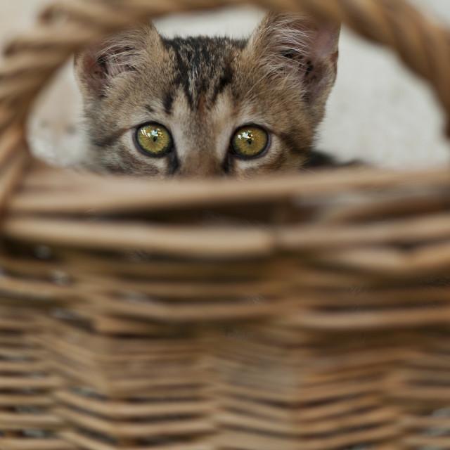 """Cat hiding"" stock image"