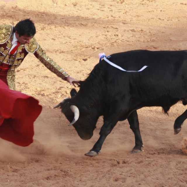 """Bullfight"" stock image"