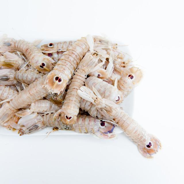 """Group of mantis shrimps on white"" stock image"
