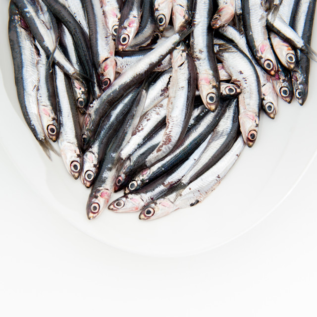 """""""Plate full of many fresh raw anchovy"""" stock image"""