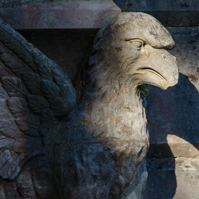"""""""Griffin"""" stock image"""