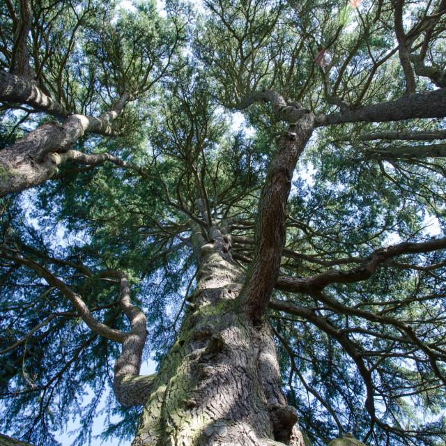 """Treetops"" stock image"