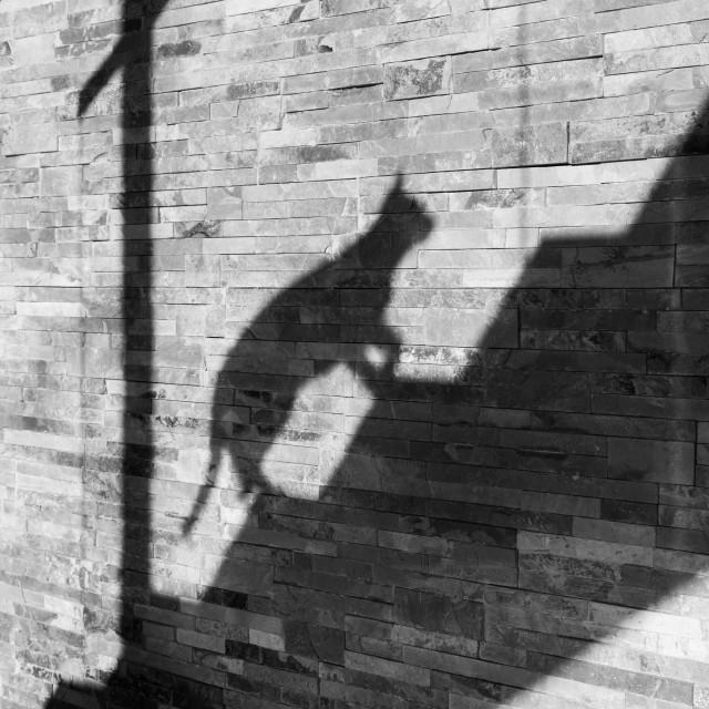 """Shadow Cat"" stock image"