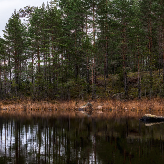 """""""Forest lake panorama"""" stock image"""
