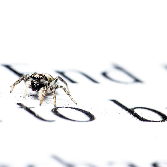 """""""A well read Zebra Spider"""" stock image"""