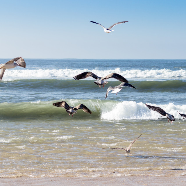 """Seagulls fishing"" stock image"
