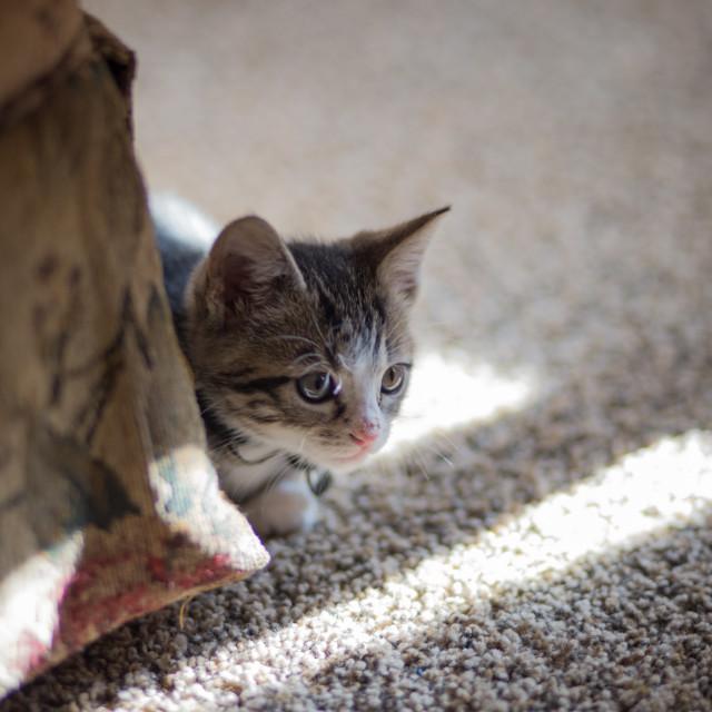 """Kitten Sneaking around Corner"" stock image"