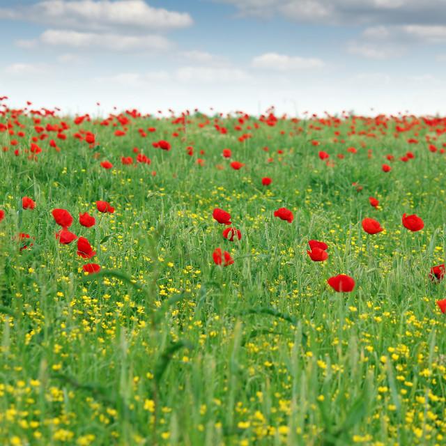 """springtime meadow wild flowers landscape"" stock image"