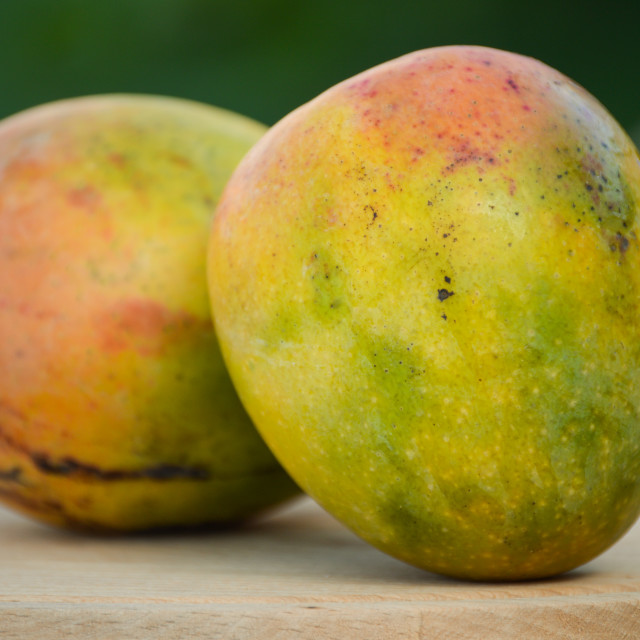 """Biological mangoes"" stock image"