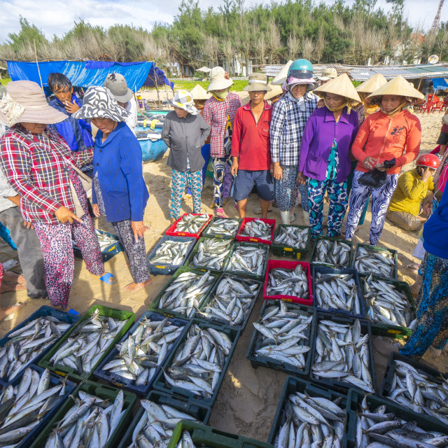 """fish market at Phan Thiet beach"" stock image"