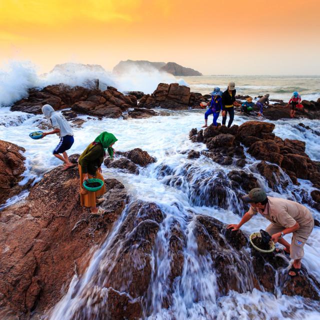 """""""people picking seaweed"""" stock image"""