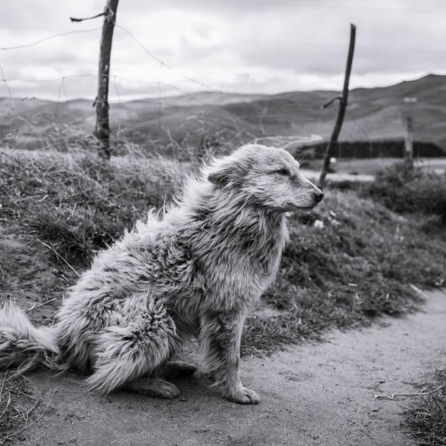 """The Farmer's Dog"" stock image"