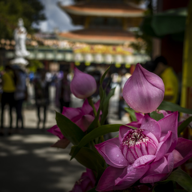 """Lotus front pagoda's gate"" stock image"