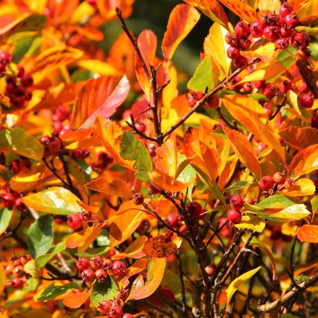 """Autumn colour."" stock image"