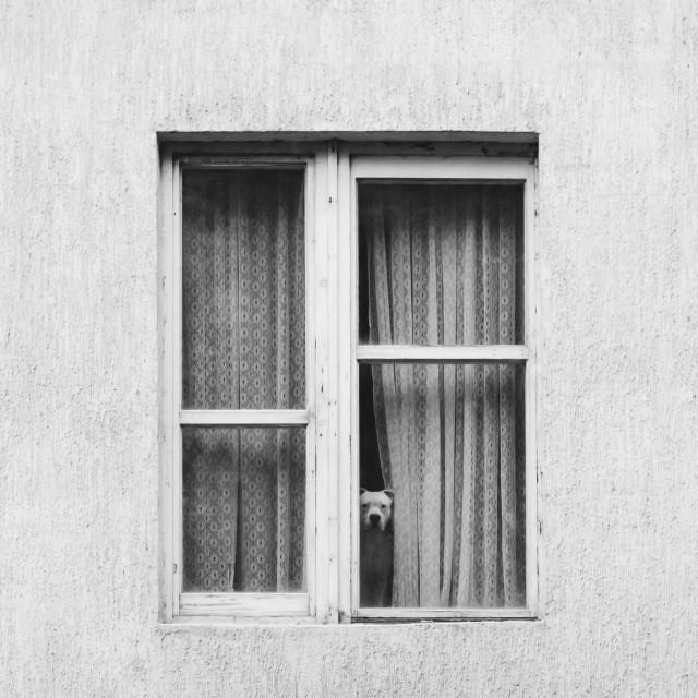 """View through window"" stock image"