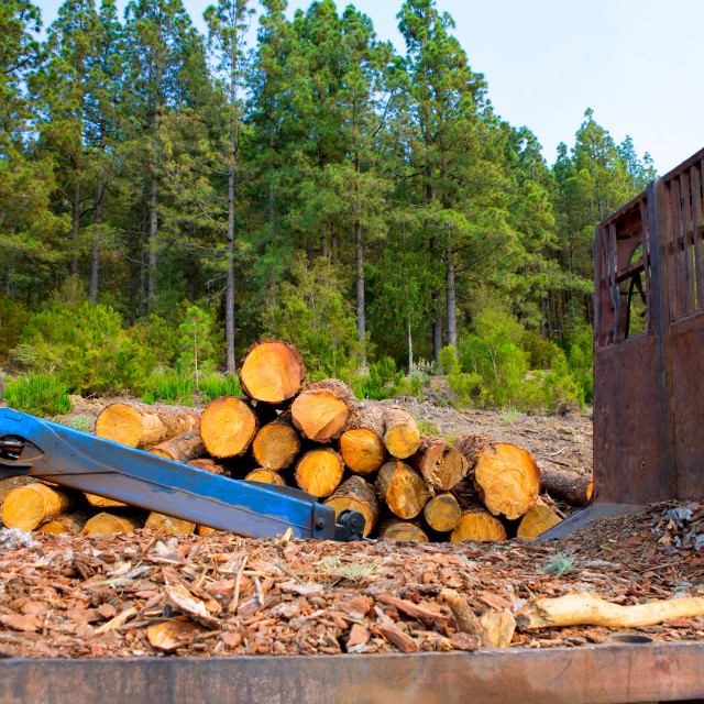 """pine tree felled for timber industry in Tenerife"" stock image"