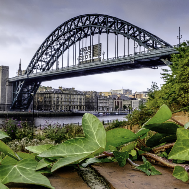 """""""Ivy Bridge"""" stock image"""