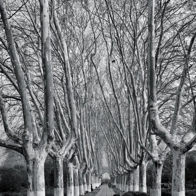 """""""trees in Nanjing"""" stock image"""