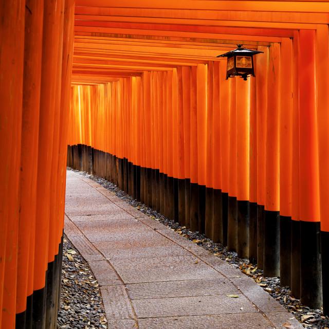 """""""Fushimi Inari Shrine"""" stock image"""