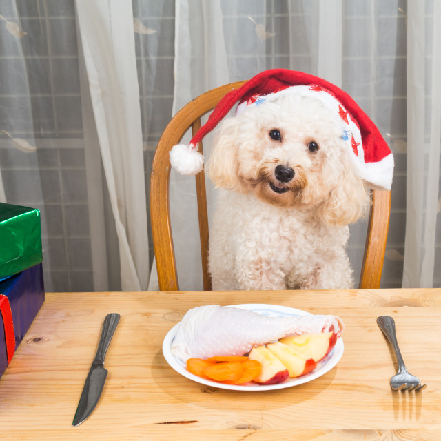 """Concept of excited dog on Santa hat having delicious raw meat Ch"" stock image"