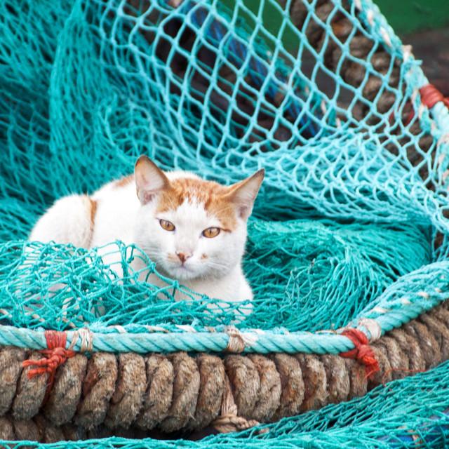 """Ship's cat"" stock image"