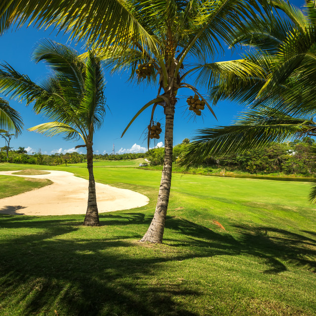 """""""Golf course. Beautiful landscape of a golf court with palm trees"""" stock image"""
