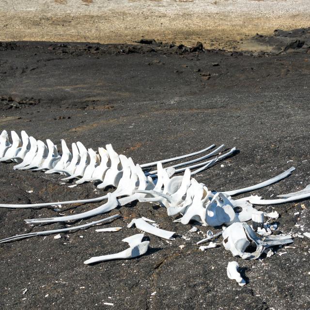 """""""Whale Bones"""" stock image"""