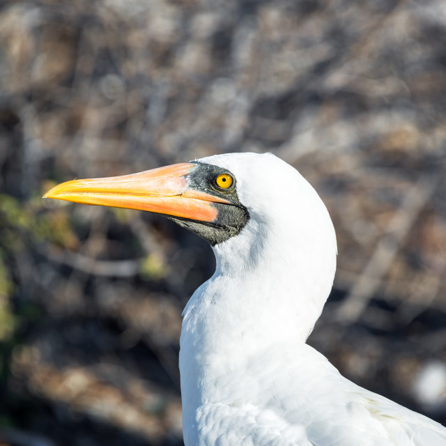 """""""Nazca Booby View"""" stock image"""