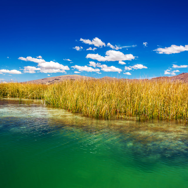 """Lake Titicaca Reeds"" stock image"