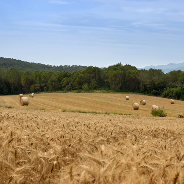 """""""Field with bales"""" stock image"""