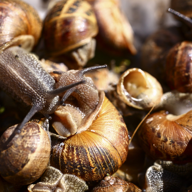 """Snails"" stock image"