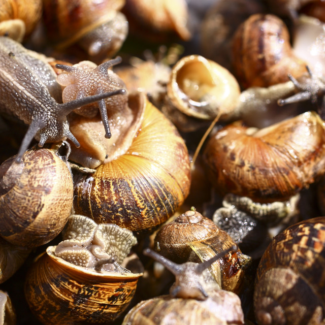 """Snails"" stock image"