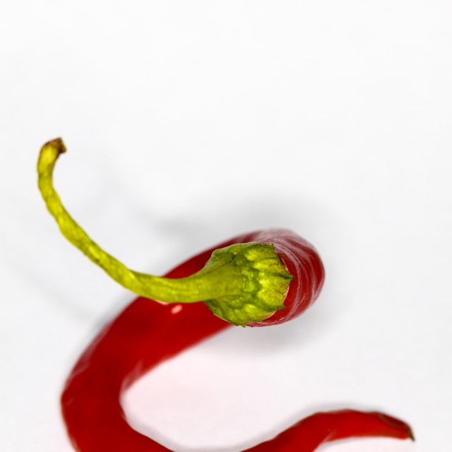 """Single red chilli pepper"" stock image"