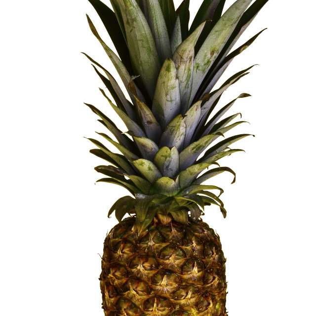 """Pineapple"" stock image"