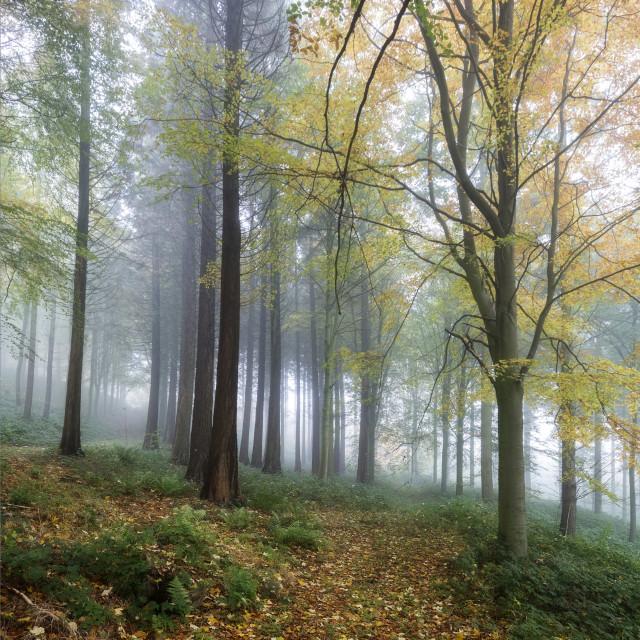 """Trees on the hillside"" stock image"